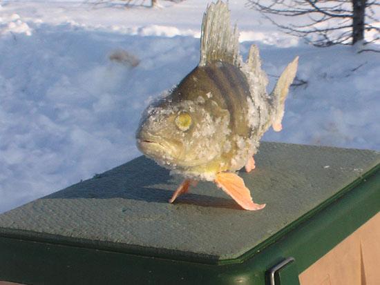 город новый уренгой рыбалка в городе
